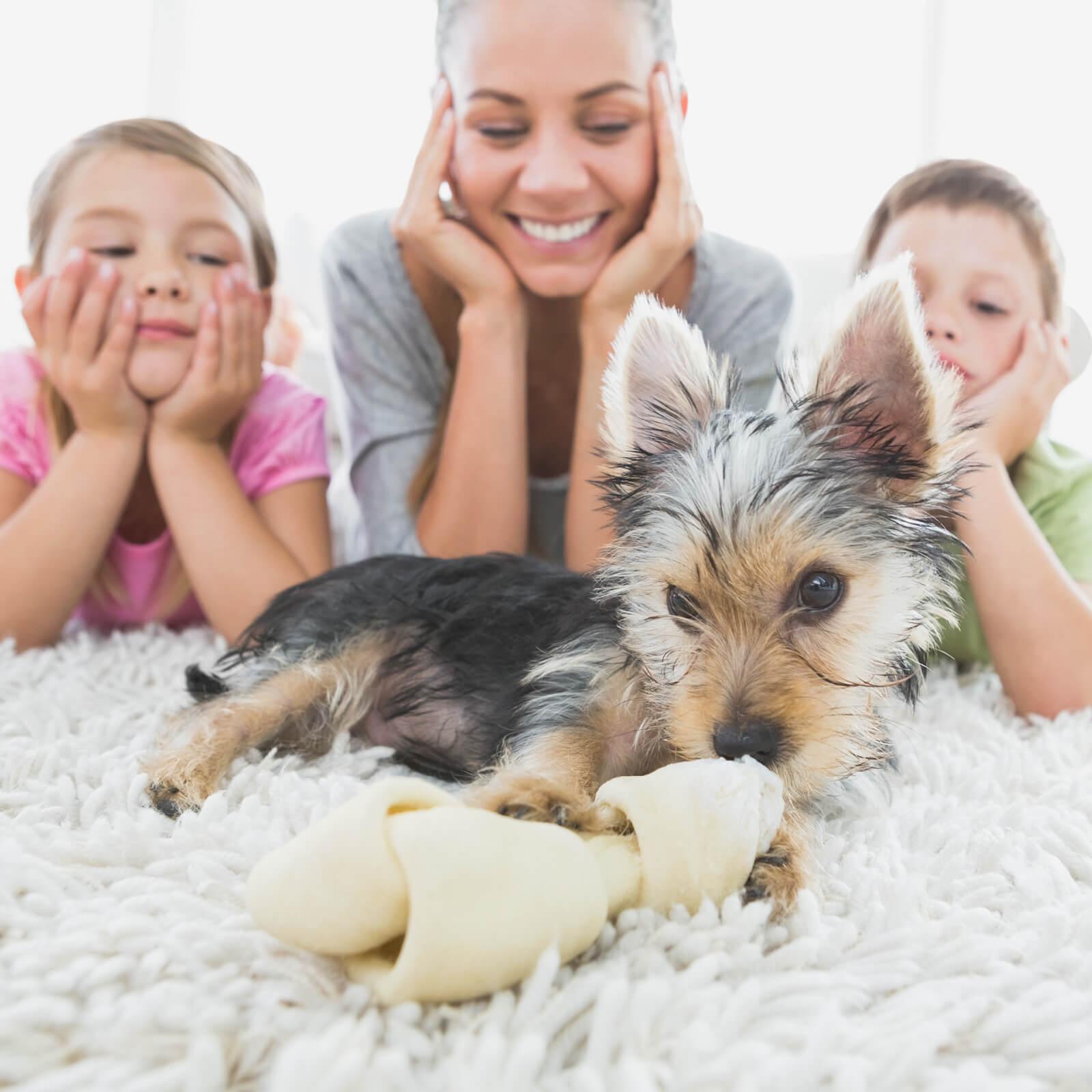 Family dog on carpet | McCool's Flooring