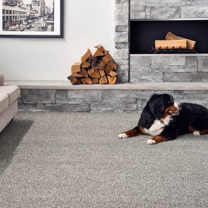 Pet friendly carpet | McCool's Flooring