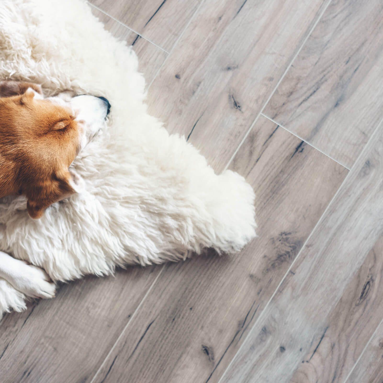 Pet friendly flooring | McCool's Flooring